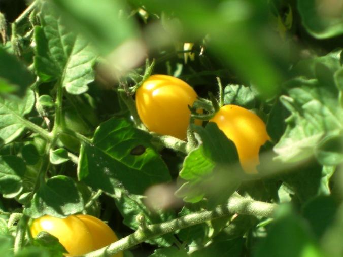 blondkopfchen tomatoes